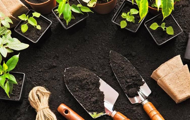Diagnóstico para servicio de Jardinería